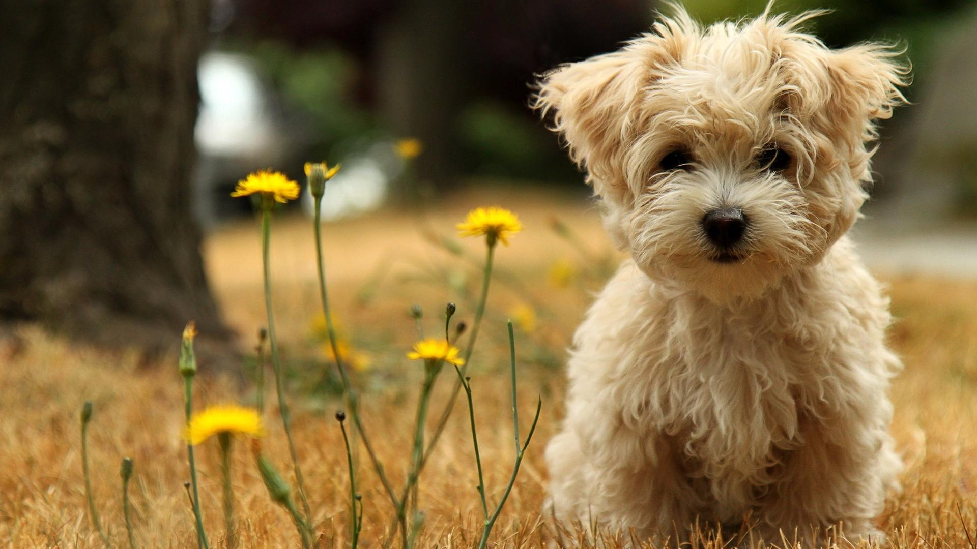 Cute-Dog-Pictures-Background-HD-Wallpaper
