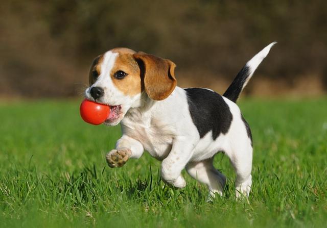 small-dog-playing