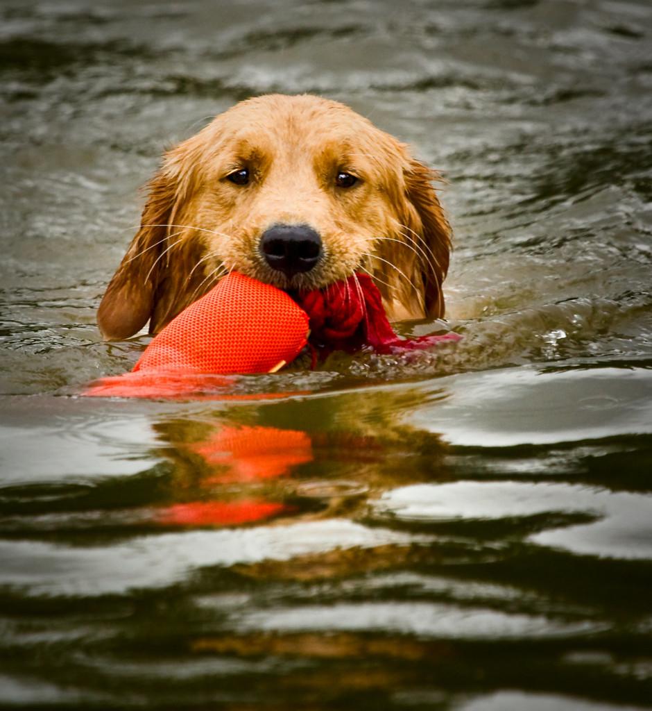 dogswimtoy