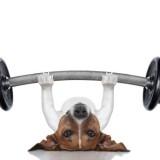 trainer dog