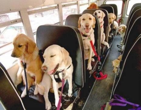 dog_field_trip